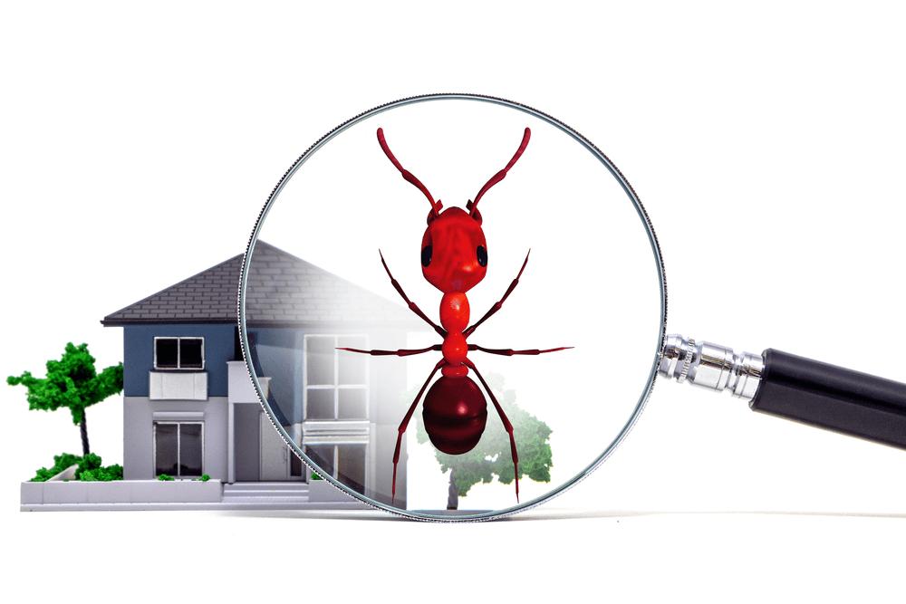 DEDETIZAÇÃO DE FORMIGA - Dedetização de formiga